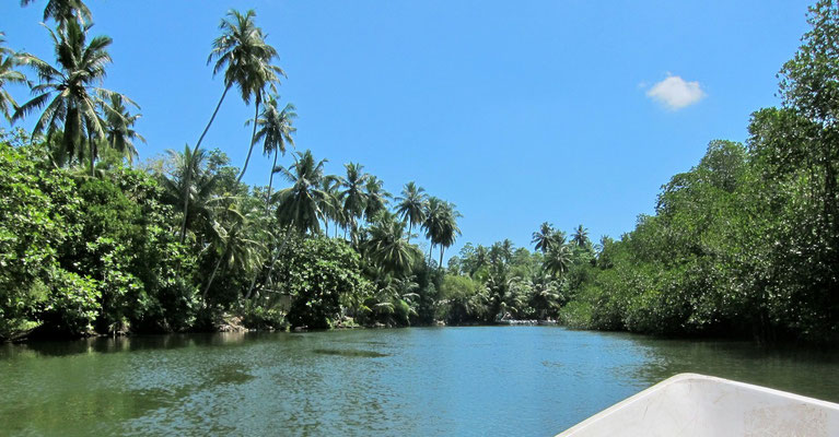 Bootstour auf dem Madu Ganga, Sri Lanka