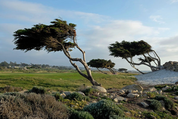 Coastal Trail bei Pacific Grove, Point Joe
