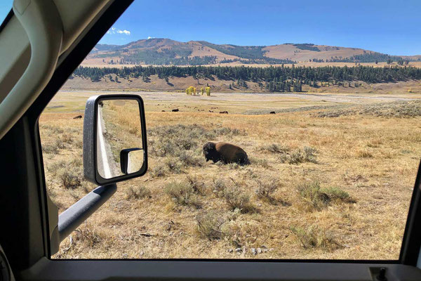 Lamar Valley Yellowstone Tierbeobachtung
