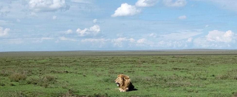 Erste Begrüßer in der Serengeti am Strassenrand