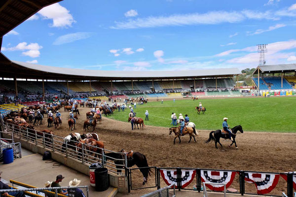 Die besten Cowboys versammeln sich zum Rodeo