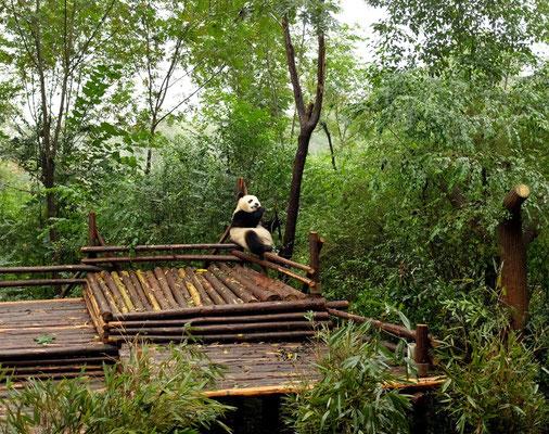 Chengdu größte Panda Forschungs- und Aufzuchtstation der Welt