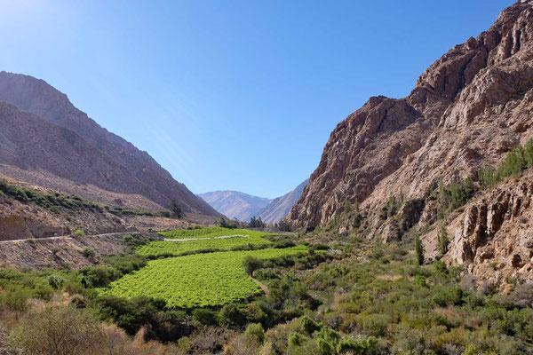 Valle Rio Cochiguaz im Valle Elqui