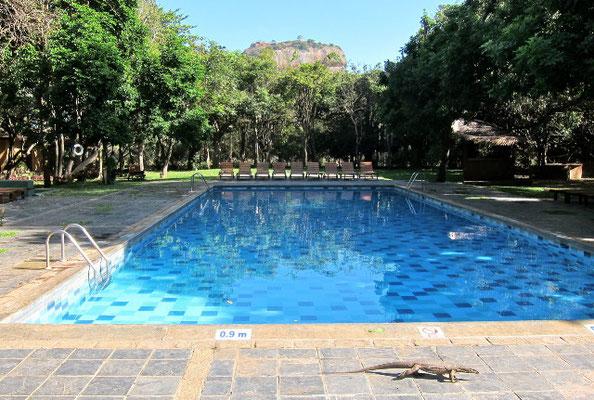 Pool Sigiriya Hotel Sri Lanka