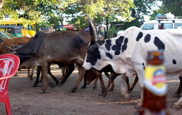 Am Strassenrestaurant zieht das Vieh vorbei – Mto wa Mbu