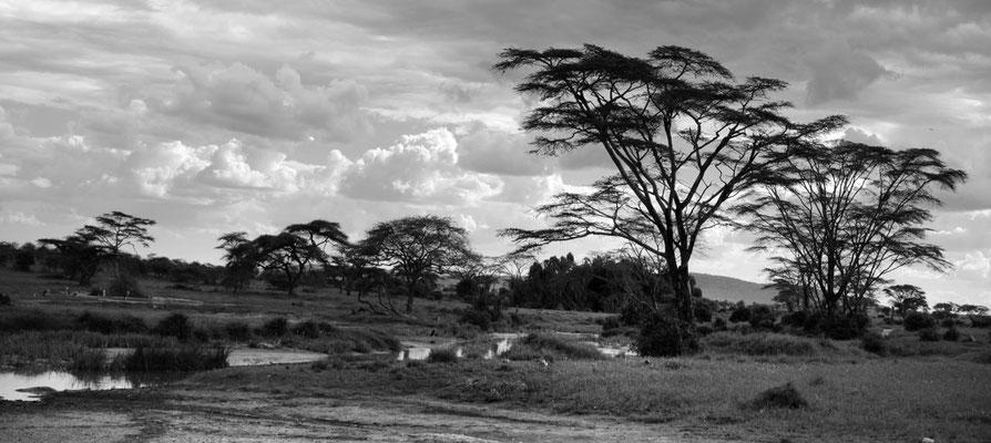 Serengeti Fluss-Landschaft mit Gelbfieber-Akazie