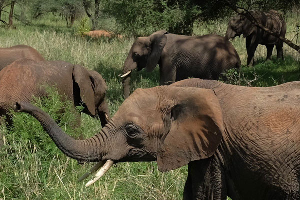 Einer der schönsten Parks in Tansania Tarangire National Park
