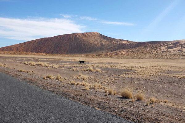 Fahrt durch Namib