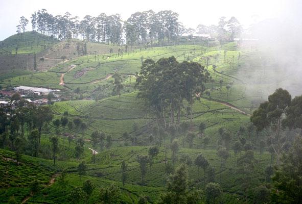 Hiking Lipton's Seat Dambatenne Teeplantage Sri Lanka