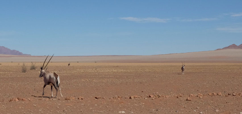 Fahrt nach Sesriem durch den Namib Kaukluft Park