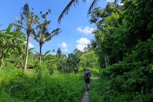 Spaziergang durch Ubuds Reisefelder