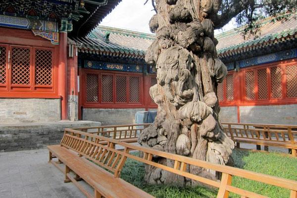 Schöne Sitzgelegeneheit im Konfuzius Tempel