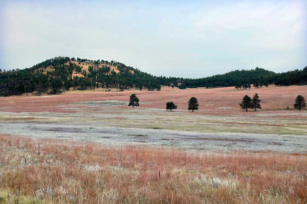 Herbstfarmen  im Custer State Park Wildlife Loop