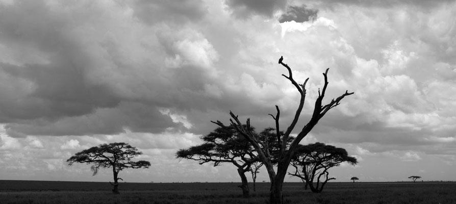 Serengeti Abendstimmung, Tansania