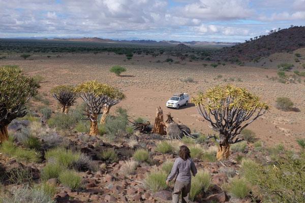 Köcherbaumwald Mesosaurus Campsite, Namibia