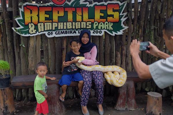 Foto mit Tigerpyhton, Yogyakarta Gembira Loka  Zoo