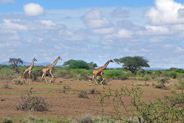 Ach ohne Big Fives ist die afrikanische Tierwelt faszinierend