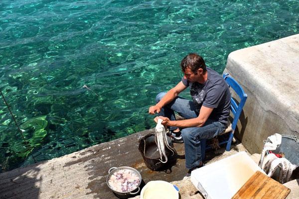 Frisch eingetroffe Tintenfische, Mani Peloponnes