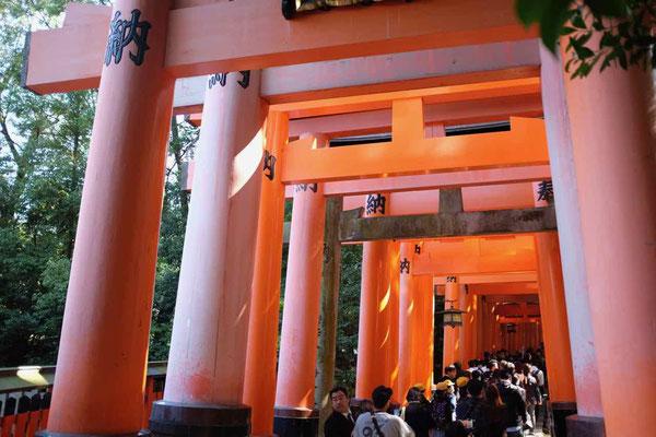 Einmalig und viel besucht  Fushimi Inari Schrein der 1000 Tore, Kyoto