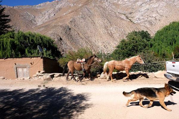 Im Valle Rio Cochiguaz Elqui Tal
