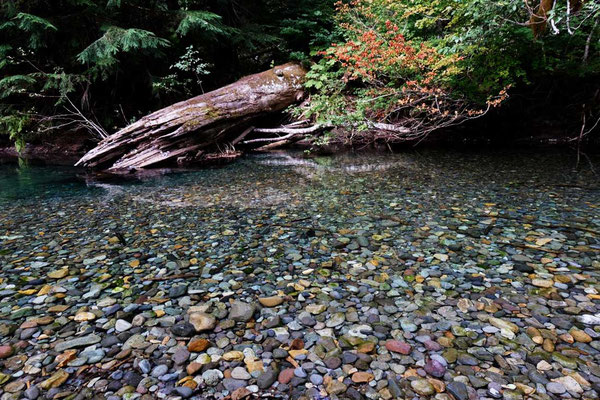 Ohanapecosh River - Grove of the Patriarchs Trail - Mount Rainier National Park
