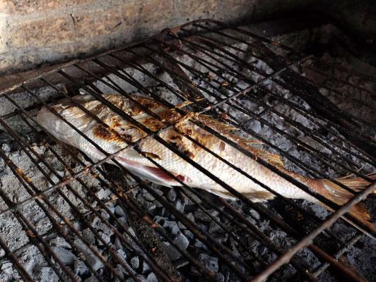 Red Snapper vom Grill, Taverna Takis, Limeni, Mani Peloponnes