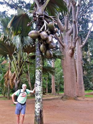 Palmen-Abteilung Kandy Botanic Garden Peradeniya Sri Lanka