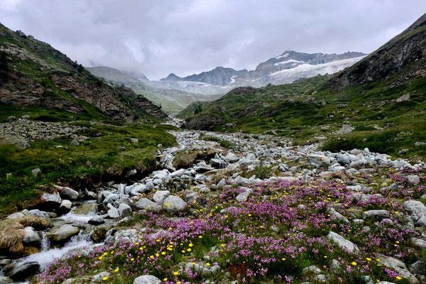 blühende alpine Landschaft beim Berggasthaus Trift, Zermatt