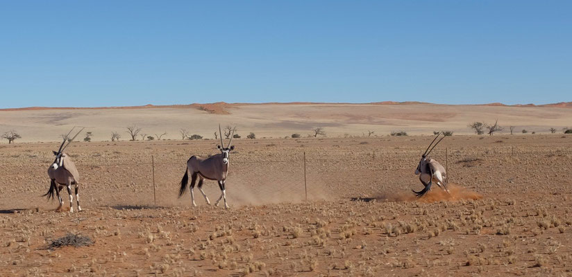 Nach Sesriem durch den Namib Kaukluft Park