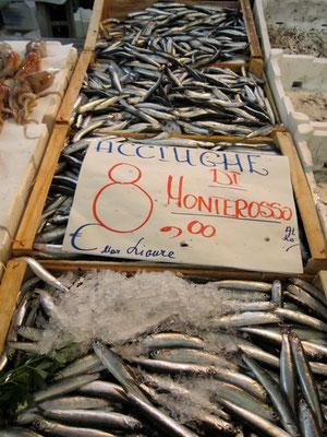 Frische Sardellen von Monterosso, Markt La Spezia Mercato