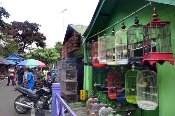 Bunter Vogelmarkt von Malang, Java
