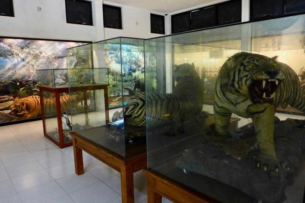 Zoo Yogyakarta Gembira Loka
