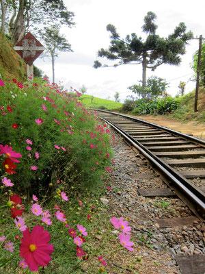 Bahngleis Wanderung in Haputale