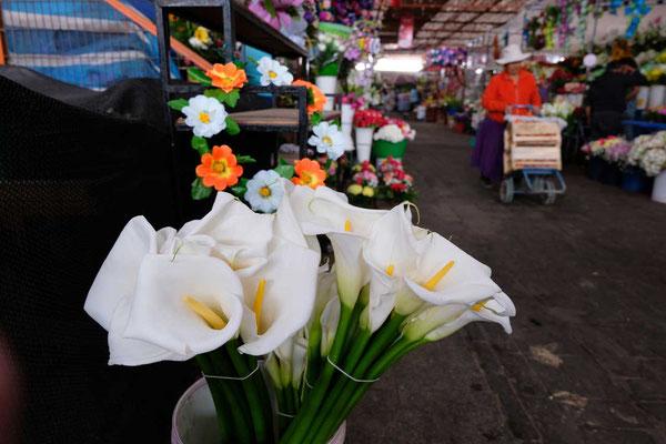 Marktbesuch in Arica