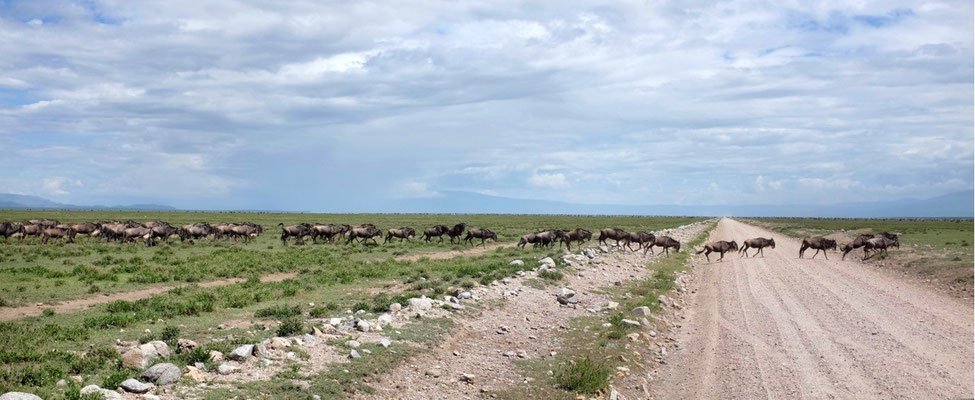 Endlose Gnu-Herden in der endlosen Serengeti