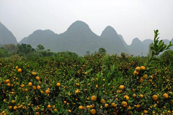 Der Duft von Mandarinen liegt in der Luft