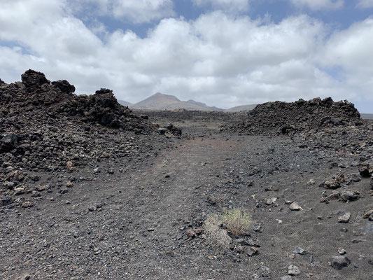"""Seit einem großen Vulkanausbruch im Jahr 1730 ist Lanzarote fast eine durchgehende """"Lavawüste"""" ... der Nationalpark """"Timanfaya"""" ist besonders beeindruckend ... leider schaffe ich es nicht die Bilder davon hochzuladen ... Computerprobleme im Urlaub ;o/"""