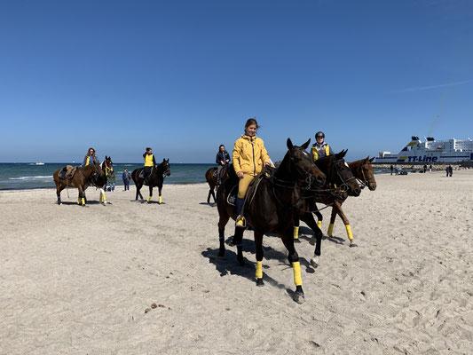 Über 70 Vollblüter sind zu dem Turnier angereist (die Pferde meine ich) ... aus Argentinien, Tschechien, ... und, und, und. Hier dürfen die Mädels die Pferde für das erste Match aufwärmen!