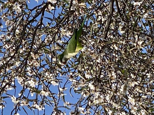 ... und die Vögel werden auch langsam bunter ... so kann es weitergehen ...