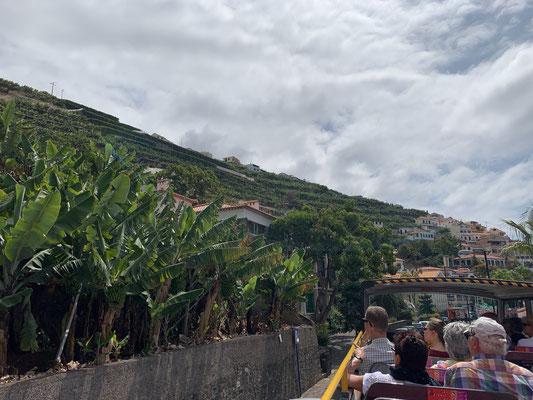 ... Bananen sind eins der Hauptprodukte der Wirtschaft hier (Neben Tourismus und Likörwein)