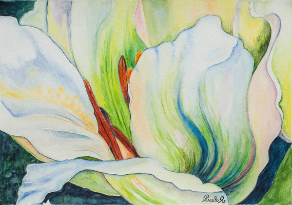 Tulipe - Aquarelle (43x30 cm) - Copyright Pascale Richert