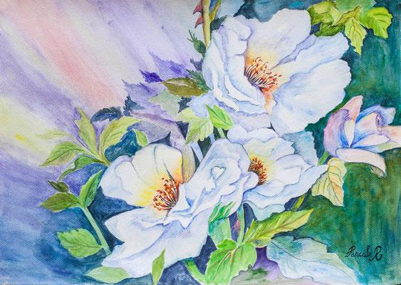 Roses - Aquarelle (43x30 cm) - Copyright Pascale Richert