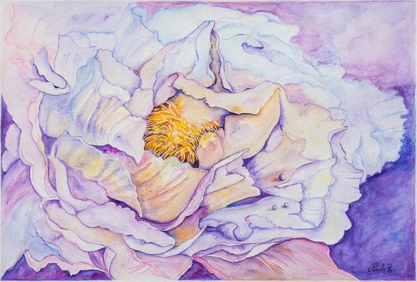 Pivoine rose  - Aquarelle (75x56 cm) - Copyright Pascale Richert