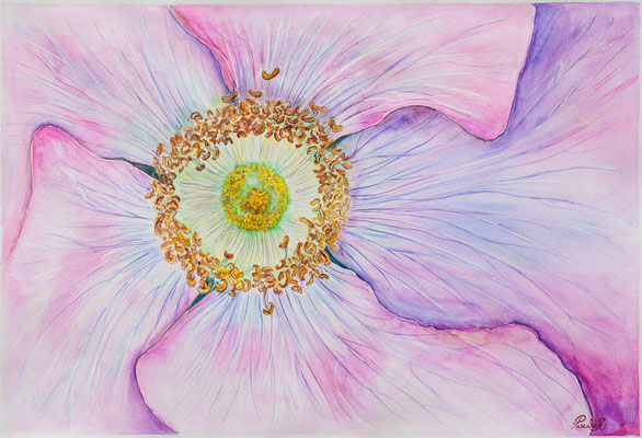 Mandala Etamines - Aquarelle (75x56 cm) - Copyright Pascale Richert