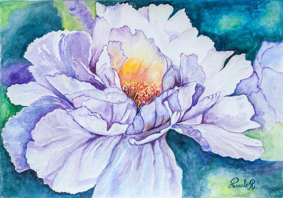 Pivoine violet - Aquarelle (45x33 cm) - Copyright Pascale Richert