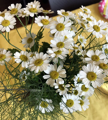 """Feverfew"" flowers from Sharon Hendrickson's garden"