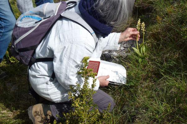 Reconnaître les Orchidées
