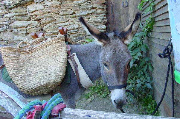 Randonner avec un âne chez Séverine