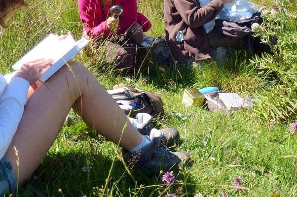Connaître les plantes sauvages, herboriser