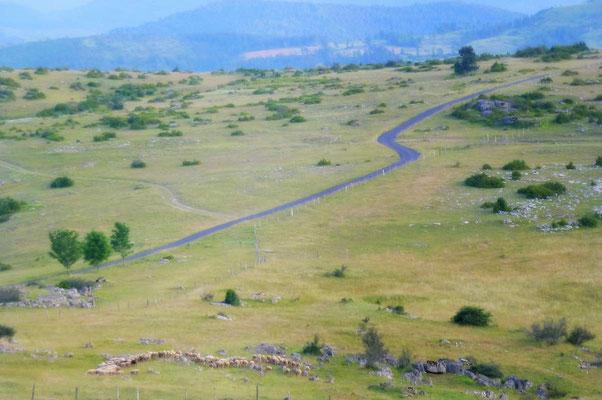 S'émerveiller : paysages stéppiques du Causse Méjean